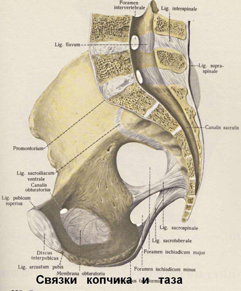 Крестцово копчиковый сустав болит колено с обратной стороны шишка